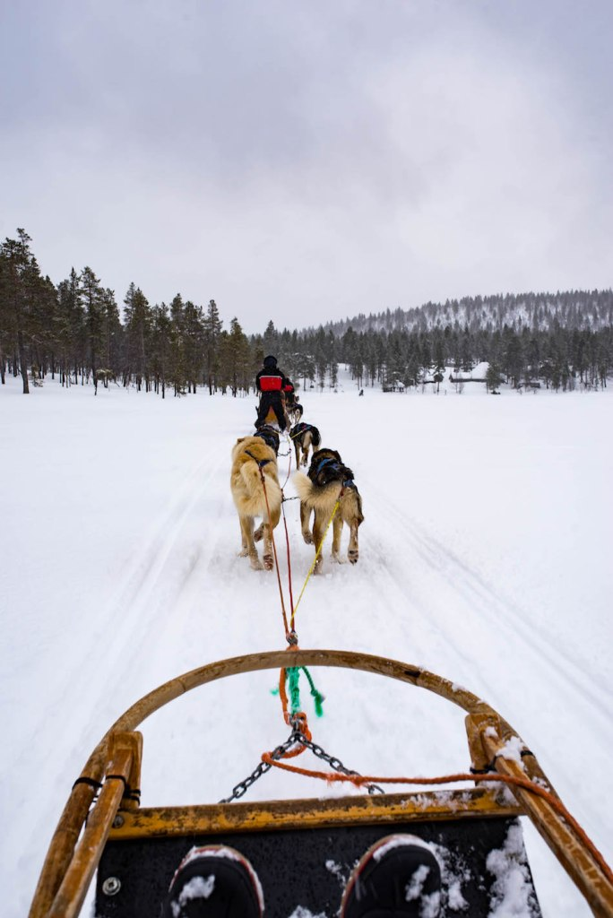 Dogsledding-in-Lapland-Finland-5