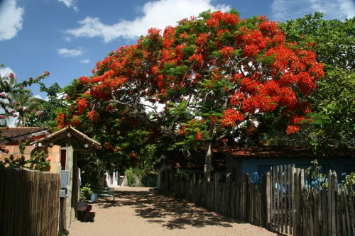 Typical street in Caraiva