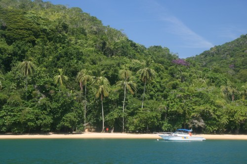 Lush tropical rainforest of Ilha Grande