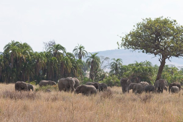 A huge family of elephants