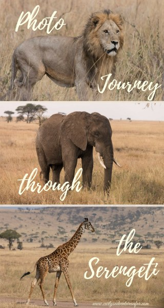 Photo Journey through the Serengeti
