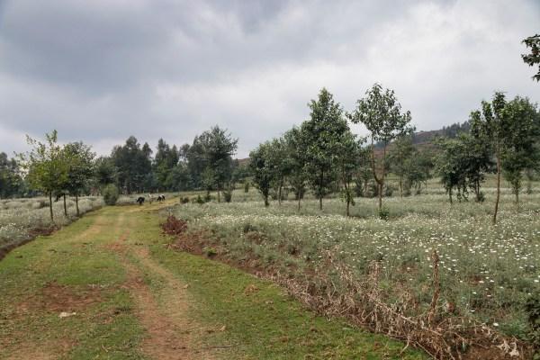 The trek through local farmlands