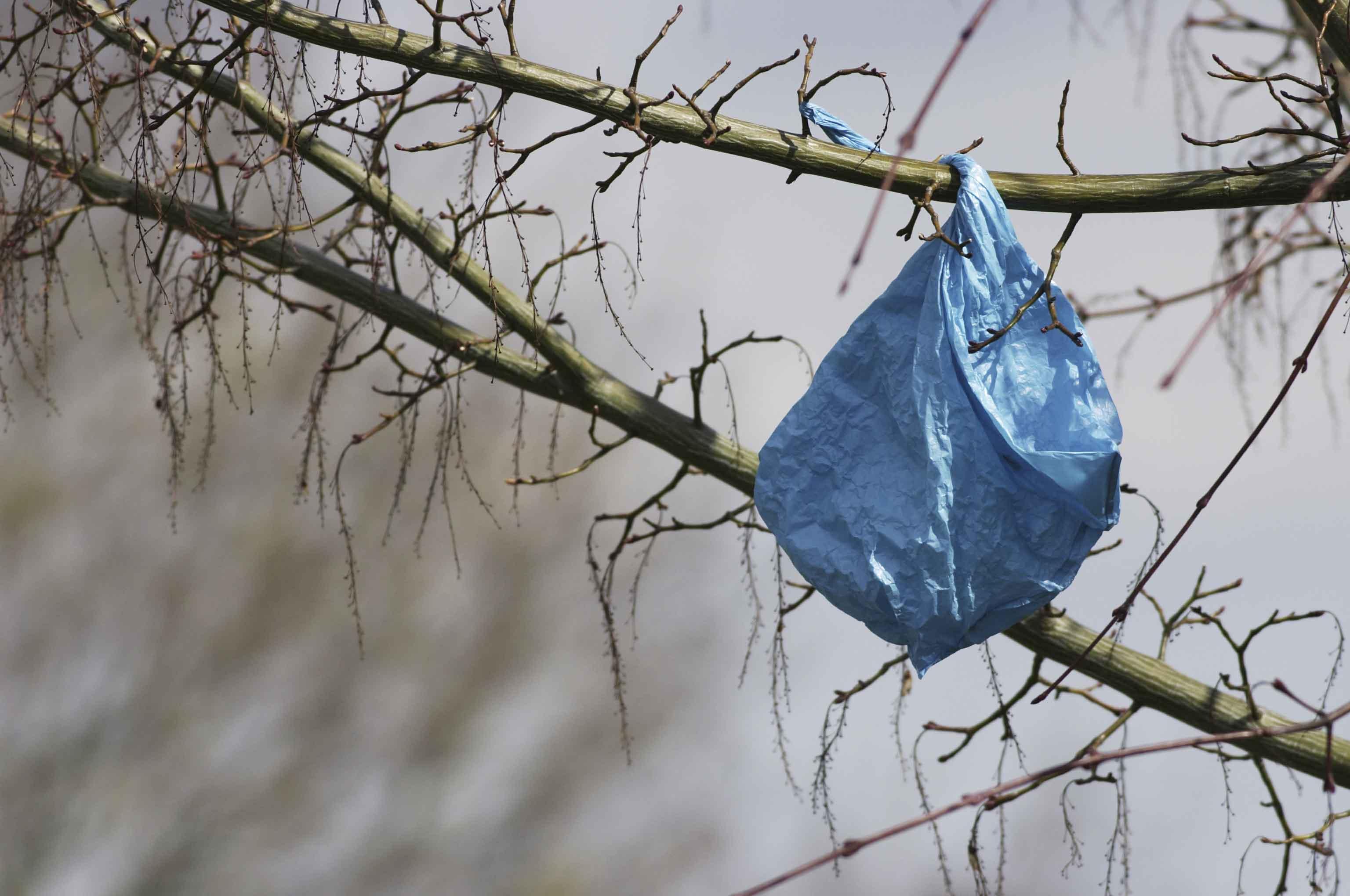plastic_bags_trees2_web