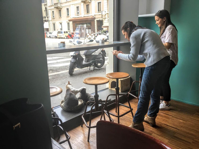 Mi felina visita a un Cat Cafe en Milan