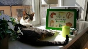 gato con la ilustración