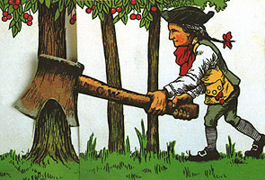 washington-cherry-tree