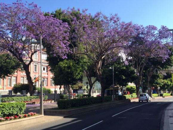 La Rambla de Santa Cruz de Tenerife