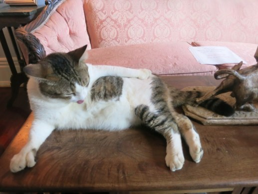 Hemingway's Six-Finger Cat cleaning itself in the Living Room, Key West