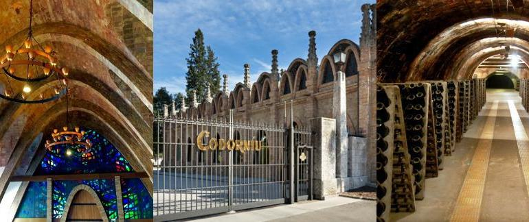 Codorniu Cava Winery Tour