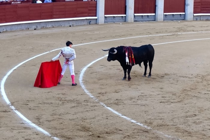 Should Bullfighting be Banned?