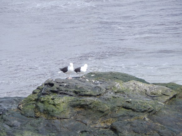 Two Birds Perched on a Rock, Cliff Walk