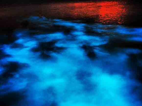 Luminous Lagoon Jamaica Image by Matt Holden used under CC license