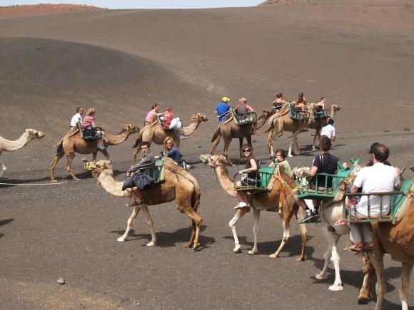 Camel ride in Timanfaya National Park, Lanzarote, Canary Islands