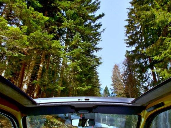 road trip trees
