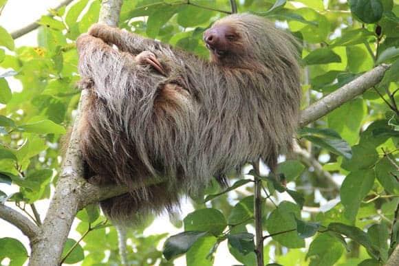 Costa Rica | Winter sunshine | Carmen's Luxury Travel