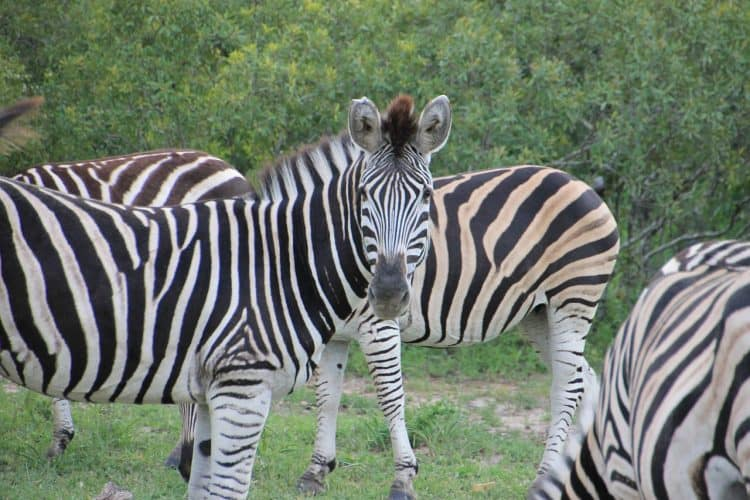 Have some Extraordinary Adventures in South Africa's National Parks