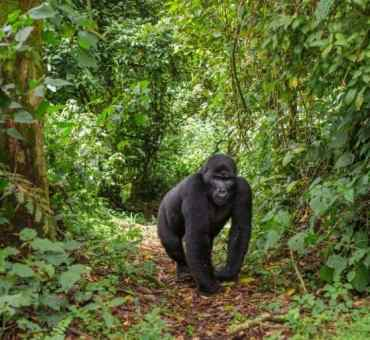 5 Things You Should Not Miss When Visiting Uganda