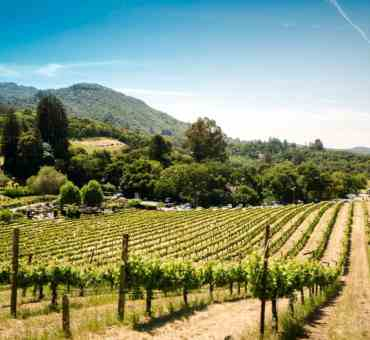6 Amazing Stops for Your California Wine Country Road Trip