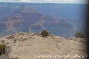 Visiter le grand Canyon : retrouvez mes conseils, mon avis et notre programme