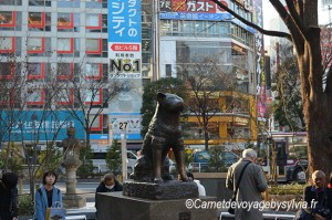 Shibuya Tokyo : découvrez le quartier branché de la capitale