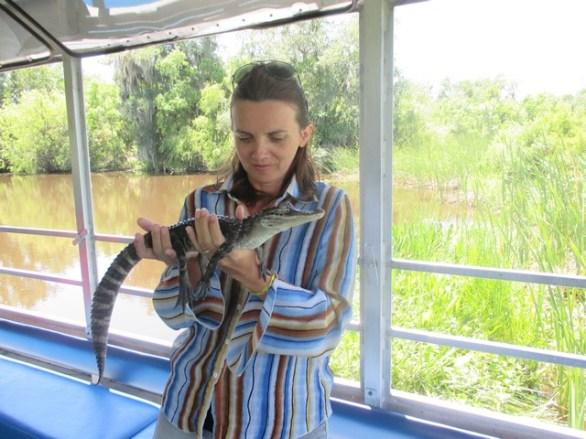 bébe alligator