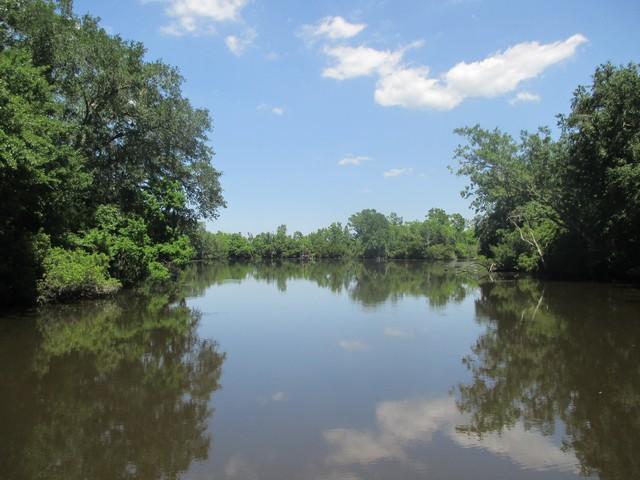 le bayou Segnette