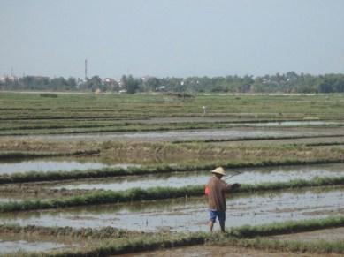 rizières sur la route de la plage Hoi An