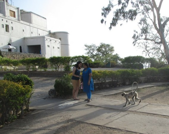 singes Monsoon Palace