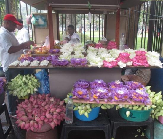 vente fleurs de lotus temple de la Dent