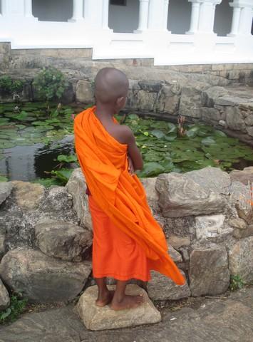 enfant-moine devant bassin de lotus