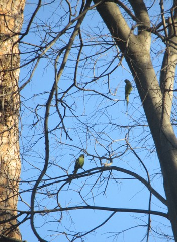 oiseaux du parc Celio Rome