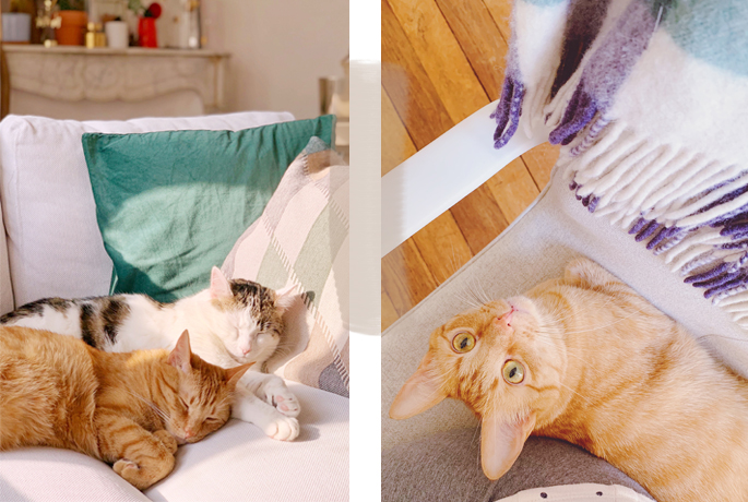 Mes chats : Woody et Weasley