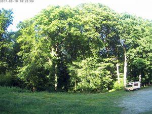 Photo arbres