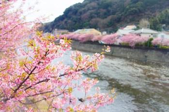 Kawazu, Shizuoka