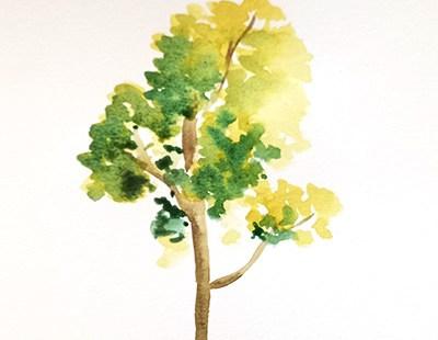 arbre aquarelle