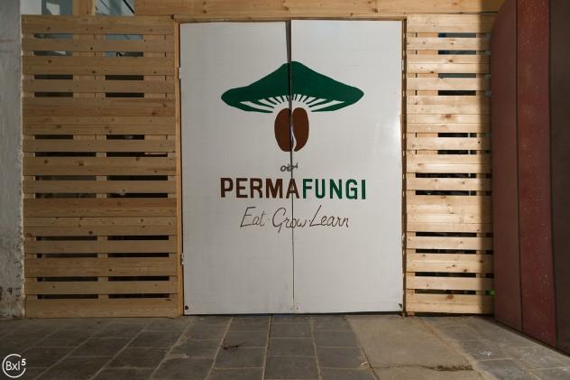 PermaFungi - 025