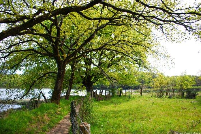 sentier-riviere-du-bono-ste--avoye