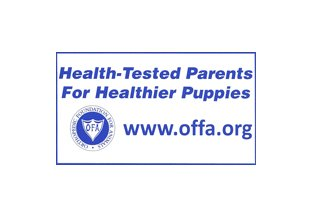 Carneys Havanese Haven, Affiliated with OFA, Orthopedic Foundation for Animals