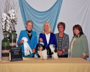 MAGGIE Our little shining star! Maggie won 4th place at the 2015 National Havanese Specialty in the 4-6 month puppy class! Thankyou Judge Beverly Vics!