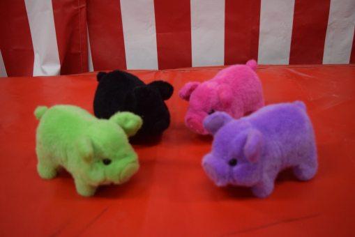 Pig Race Pigs