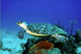 playa tour tortugas