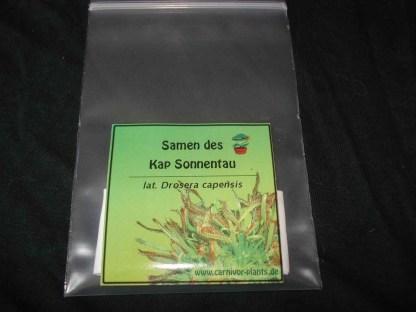 Drosera-capensis-Samen