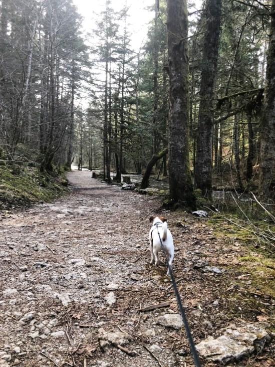 Casacdes Tufs Hérisson chien (31)