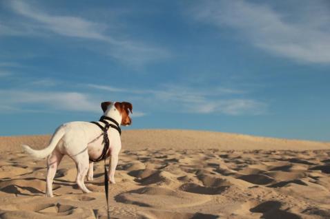 Dune Pilat avec son chien (33)