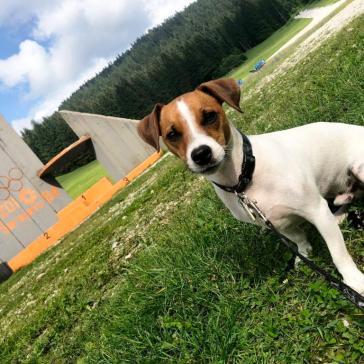 Igman chien (9)