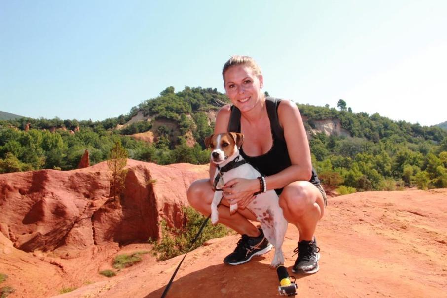 Colorado Provençal chien