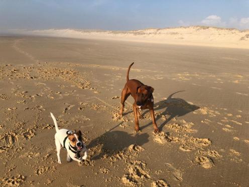 Lacanau chien (4)