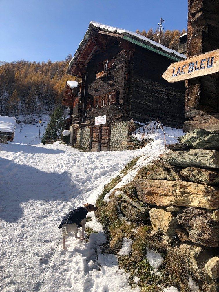 Arolla Chien Valais Suisse