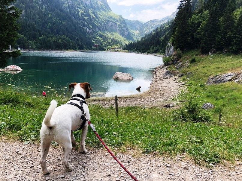 randonnée avec ton chien