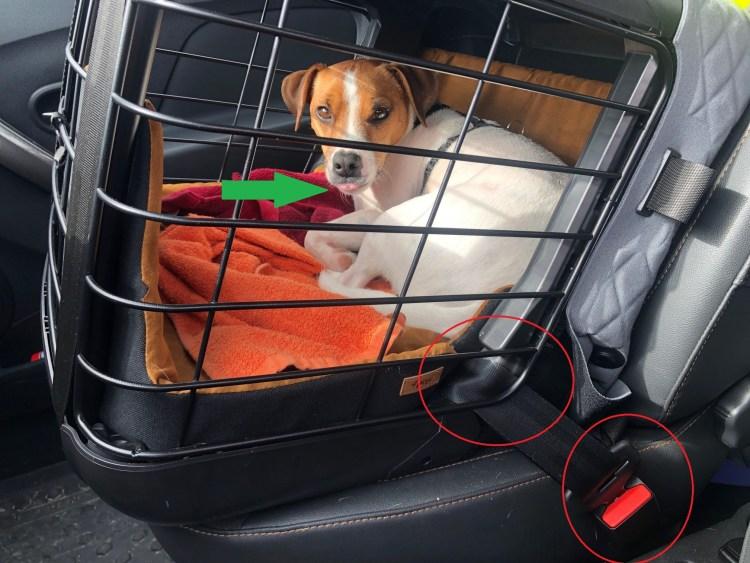 Caisse transport chien 4pets